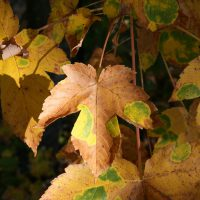 gal_automne_00025
